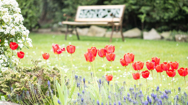 sunhill tulip